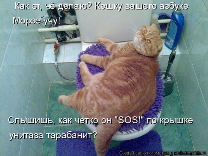 Лучшие котоматрицы недели 6