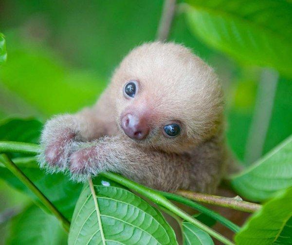 Самые лучшие фотографии в честь Всемирного дня ленивца