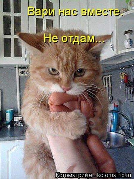 Лучшие котоматрицы недели 5