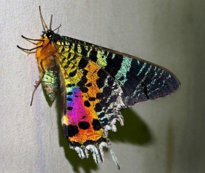 Самые красивые насекомые – потрясающе!