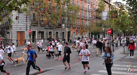«Собачий» марафон в Испании