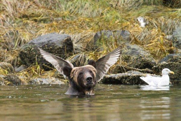 Eщё 25 несерьёзных фотошедевров конкурса 2016 Comedy Wildlife Photography Awards