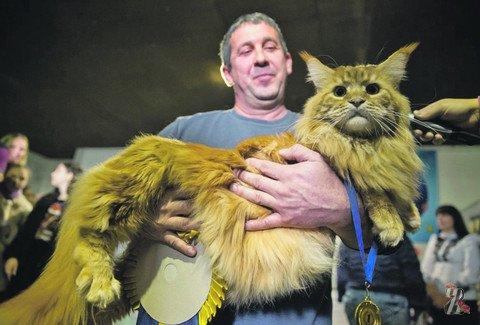 В Киеве выбирали самых больших котов
