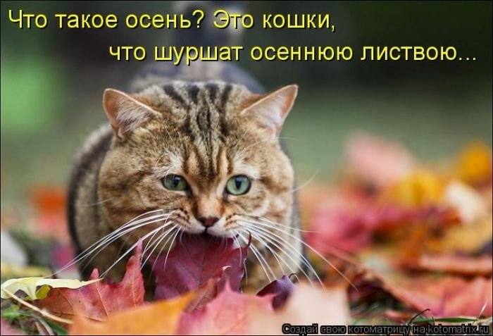 Лучшие котоматрицы недели 1