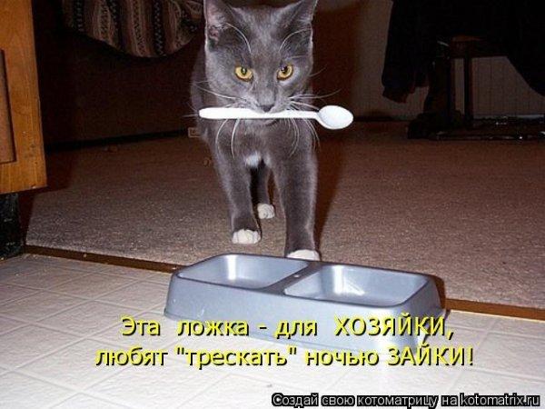 Лучшие котоматрицы недели 9