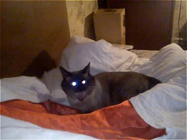 Cамый злой кот в мире