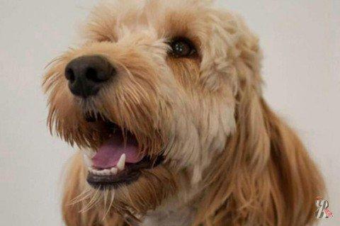 В Великобритании пес спас ребенка от смерти в сушильной машине
