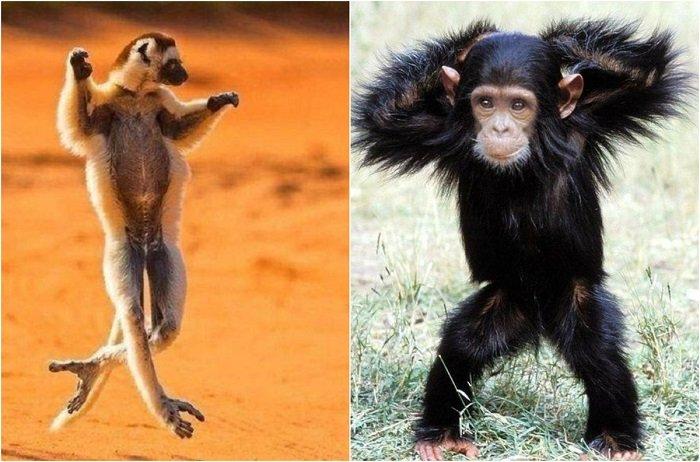 Эти забавные животные: 20 фотографий зверушек, которые могут побороться за титул лучшего танцора