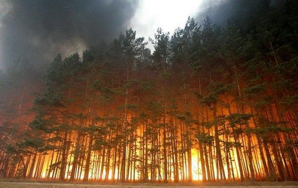 На Донбассе сгорели больше трети заповедников — экологи
