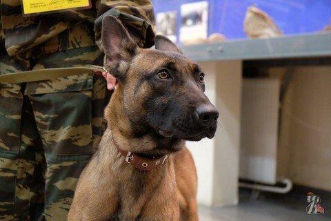 Первые в России служебные собаки-клоны приступили к службе в полиции Якутии
