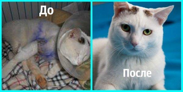 Кошки: до и после