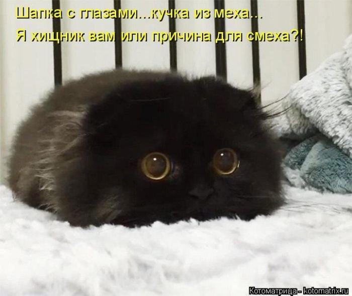 Лучшие котоматрицы недели 10