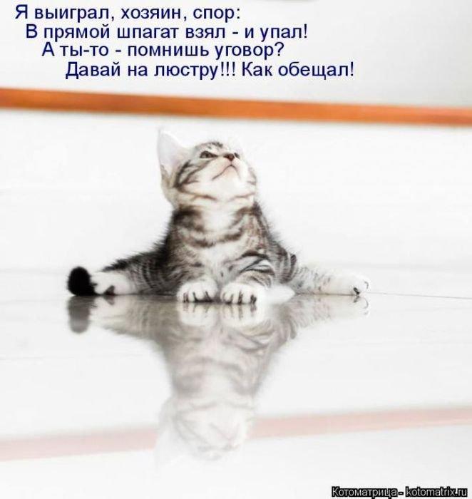 Лучшие котоматрицы недели 8