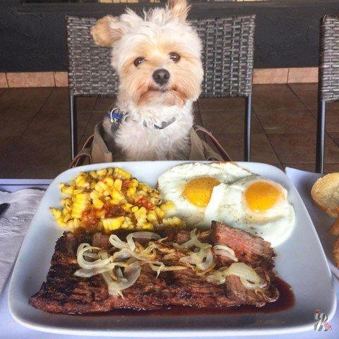 Бывшая бездомная собака каждый день обедает в дорогих ресторанах