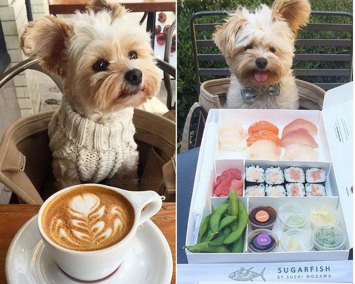 История бездомного пса, который нашел любящих хозяев и завел Instagram для фуд-фотографий