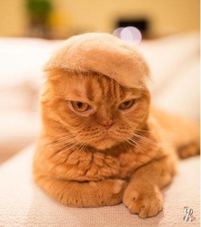 Коты в шапках из их собственной шерсти