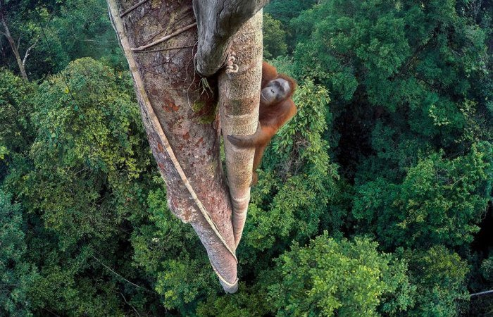 Этот удивительный мир: 11 уникальных фотографий дикой природы, победивших на конкурсе Wildlife в 2016 году