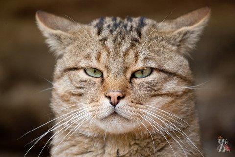 В Варшаве кошка спасла семью из пяти человек от отравления угарным газом