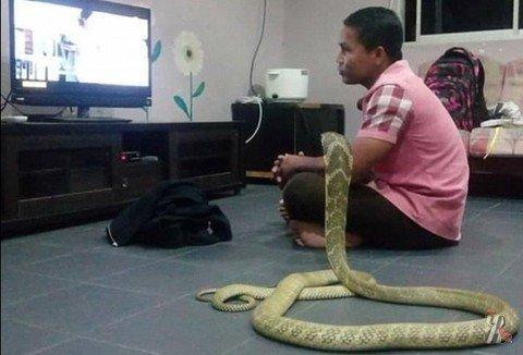 Когда жена – змея
