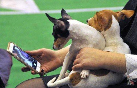 В Киеве прошла выставка собак