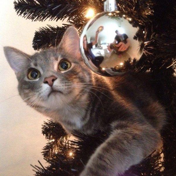 Коты против Рождества или почему новогодние праздники являются любимым временем кошачьих