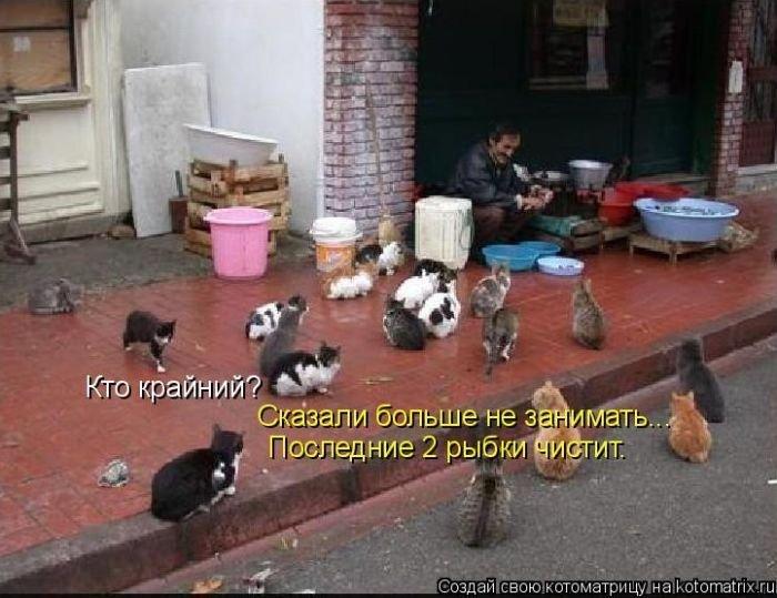 Лучшие котоматрицы недели 50 фото