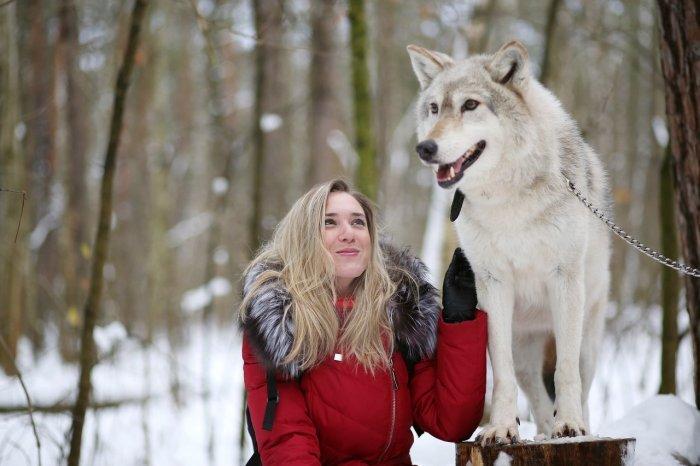 Волки фото — Снег и Лес. 70 фотографий волков.