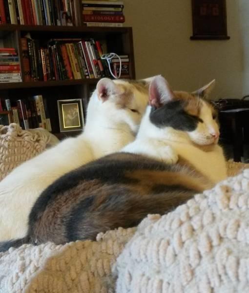 Кошки, которые делают все в унисон