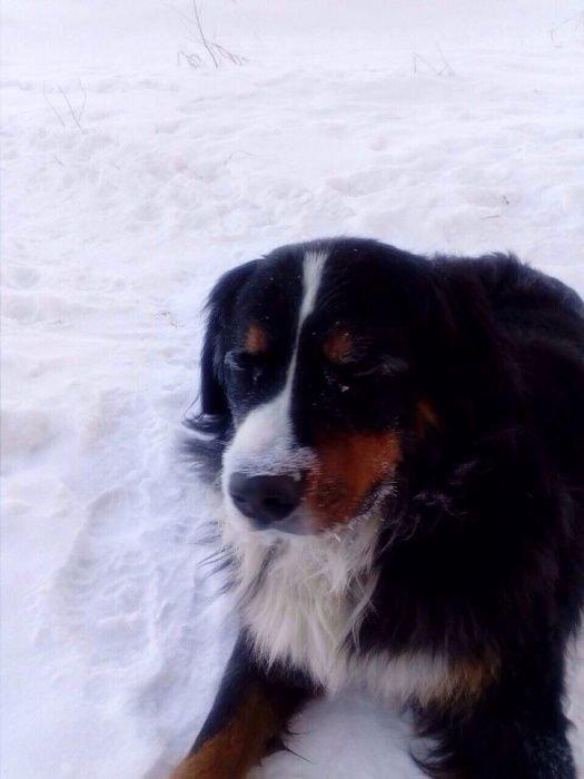 В Омске пес по кличке Ватсон нашел замерзающих в снегу котят