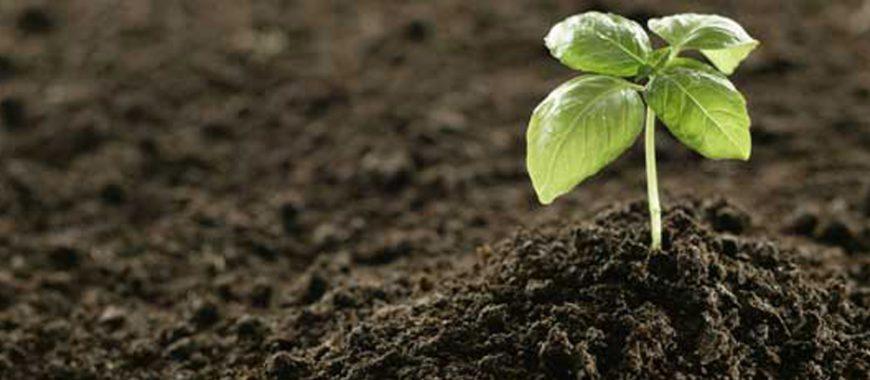 Выбираем хороший почвогрунт для рассады.