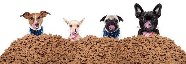 Лучшие корма для собак - ТОП лучших сухих кормов.