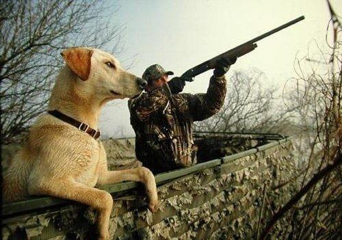 Основная экипировка для охотников на пернатую дичь.