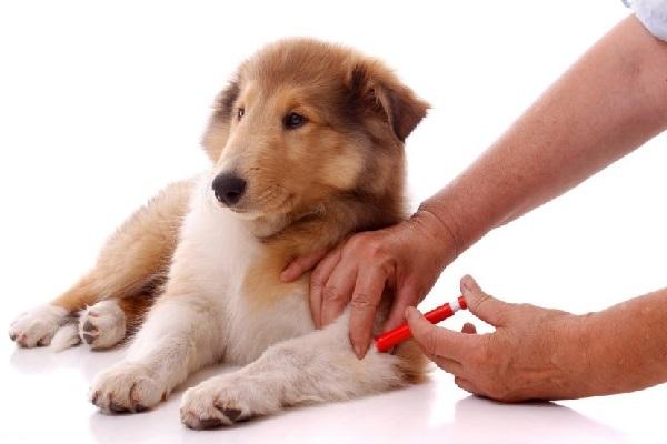 Уход за щенком и советы начинающему собаководу.