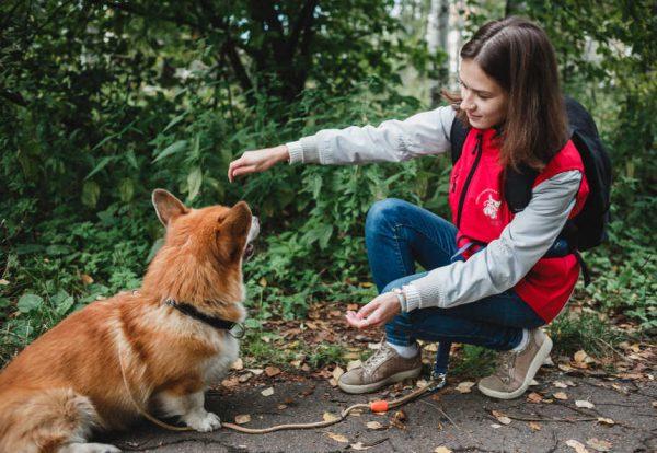 Как обеспечить полноценный присмотр за собакой?