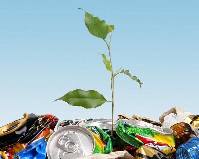 Влияние упаковки на окружающую среду и экологию.
