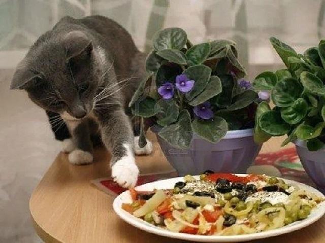 Чем кормить беспородного кота в домашних условиях?