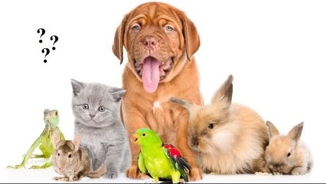 Родители, дети и домашние животные.