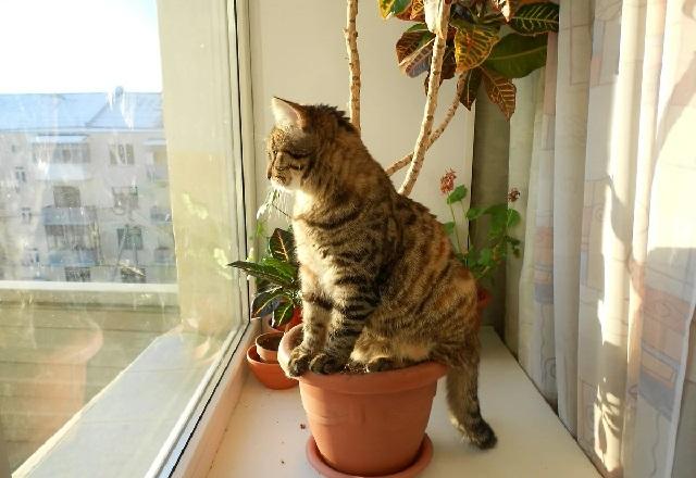 Кот поел все цветы на подоконнике, что делать?