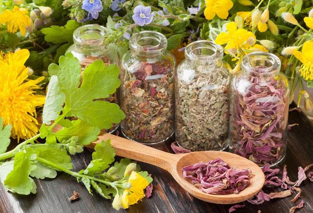 Лечебные травы для животных, используемые в ветеринарии.