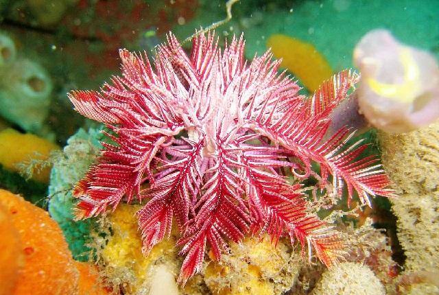 ТОП-6 морских организмов с самыми экстравагантными методами питания.