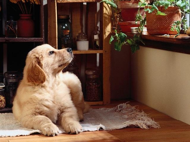 Почему собака чешет зад об пол?