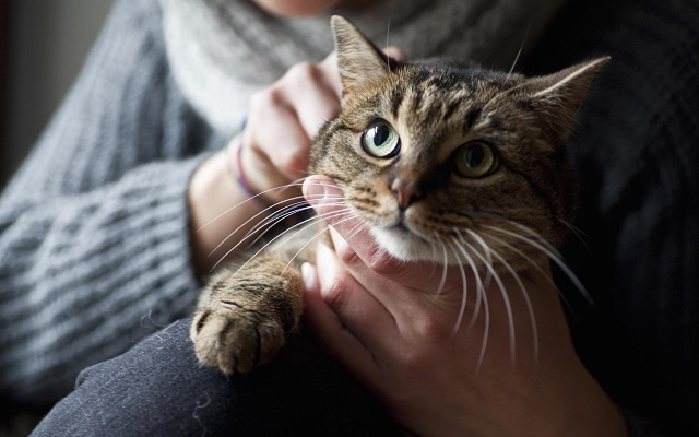 Кот на руках у хозяйки.