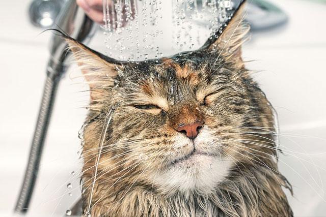 Как и чем помыть кота дома.
