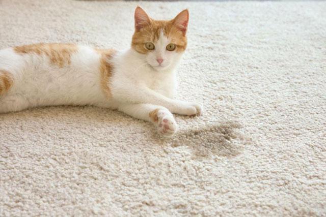 Как избавиться от запаха кошачьей мочи в квартире на ковре и мебели.