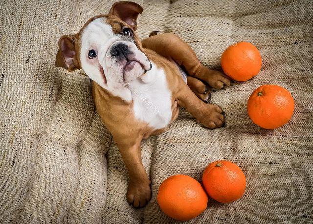 Какие запахи не нравятся собакам?