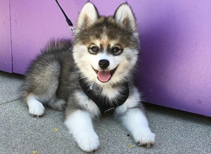 Какие собаки считаются самыми красивыми в мире?