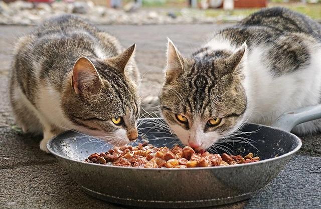 Корм для кошек своими руками как сделать?