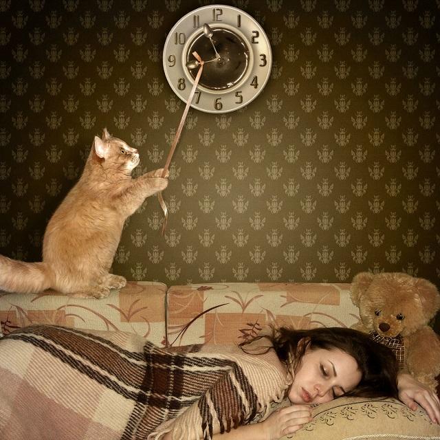 Кошка не дает спать по ночам.