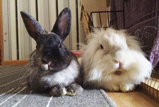 Кролик в квартире – плюсы и минусы, особенности содержания.