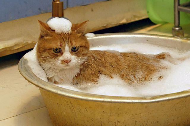 Можно ли мыть кошку шампунем для людей?